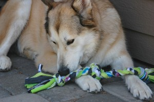 We use our leftover scraps to make chew toys for dogs.